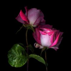 A HOST of SORROWS...ROSE by Magda Indigo on 500px