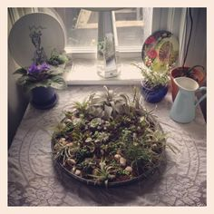 succulent and airplant garden