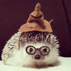Harry Potter Hedgehog  ϟ 9¾ ⚯͛ △⃒⃘