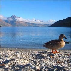Lake Wanaka, Queenstown. New Zealand