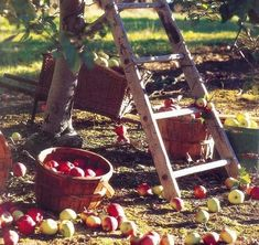 ... | Cider | Pinterest | Cider Press, Apple Cider Press and Apple Cider