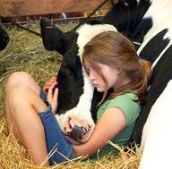 i wanna love on a cow
