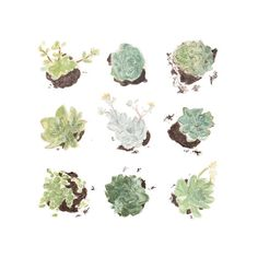 Succulents Study Watercolor Print by StripedCatStudio on Etsy