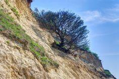 Sliding tree
