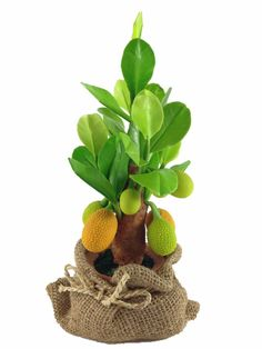 Harvie Home Decor - Artificial Jackfruit Tree, Clay Plant Model with Clay Pot and Mini Sack * Be sure to check out this awesome product.