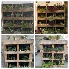 Before/after - re-purposed pallets for flower wall and veggies. Great idea - quite happy with the results. Had to put chicken wire over the strawberries (bottom right) as something was eating them during the night. Veggie Box, Flower Boxes, Flowers, Recycled Pallets, Chicken Wire, Flower Wall, Repurpose, Strawberries, Recycling
