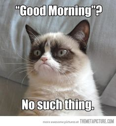 Funny pictures about Grumpy Cat Wakes Up. Oh, and cool pics about Grumpy Cat Wakes Up. Also, Grumpy Cat Wakes Up. Grumpy Cat Quotes, Meme Grumpy Cat, Angry Cat Memes, Grumpy Cat School, Gato Grumpy, Grumpy Cat Good, Grumpy Kitty, Sad Cat, Kitty Cats