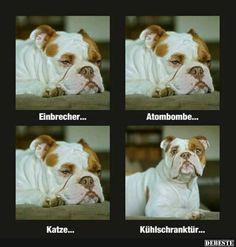 Einbrecher.. | DEBESTE.de, Lustige Bilder, Sprüche, Witze und Videos