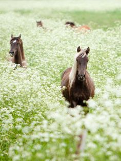 Pretty horses in a field of flowers