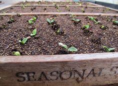 4 season gardening - YES!