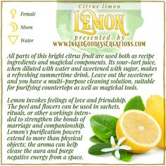 Despite its Moon correspondence, the Lemon can also represent the Sun in workings and rituals. Its bright color invokes happiness and vitality, and every slice contains a sunburst shape. // #lemon #purification #kitchenwitch #magick #citrus #love #cleansing #negativity #moon #friendship Pergola Planter, Magick, Wiccan, Witchcraft, Plant Magic, Witch Herbs, Summertime Drinks, Kitchen Witchery, Cleaning Solutions