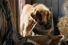 Official movie site for A Dog's Purpose, starring Britt Robertson and Dennis Quaid. In theaters January 27, 2017.