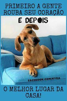 #petmeupet #cachorro #amomuito