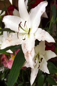 Lily by Dennis Begnoche - Photo taken of lily flower Click on the image to enlarge.