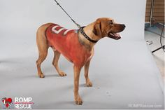 3.) Give your dog a shirt! Nice and simple, and you can make it your favorite team's colors, too.