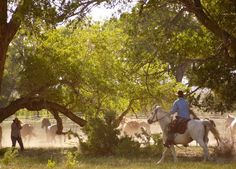 Running horses through a group of old cottonwood trees at Zapata Ranch. #ZapataRanch