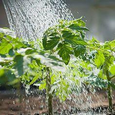 Growing Edibles. | Garden Club