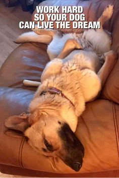 Work Hard so your dog can love the dream Funny Animal Pictures, Funny Animals, Cute Animals, Animal Quotes, Dog Quotes, German Shepherd Memes, German Shepherds, Malinois Dog, Schaefer
