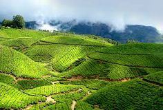 Munnar is a hill station on the Western Ghats, a range of mountains situated in the Idukki district of the Indian state of Kerala.This hill station is marked by vast expanses of tea plantations, colonial bungalows, rivulets, waterfalls and cool weather. It is also an ideal destination for trekking and mountain biking.