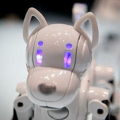 Robot-huisdieren lijken grote populariteit te genieten. Tomy introduceert in het voorjaar van 2013 i-SODOG. Een lief robothondje met genoeg sensoren voor vermaak. http://www.robots.nu/