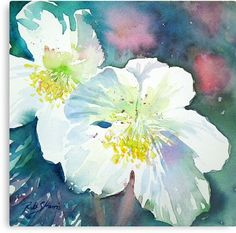 Some of the prettiest, hardiest plants in the garden, they cheer us up after a long winter. / Painted in watercolours on Fabriano Artistico extra white paper, the original work measures 7.25″ × 7.5″ • Also buy this artwork on wall prints, home decor, and stationery.