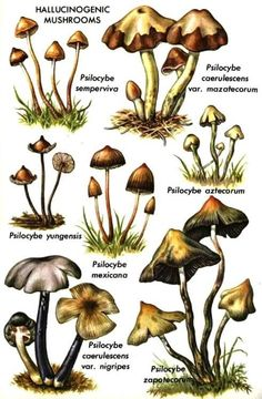 Hallucinogenic Mushrooms