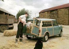 mini on a farm!