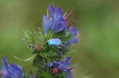 Schoonheid van de natuur en de kleuren die daarbij horen geven me inspiratie!