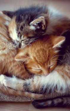 Sweet napping kitties - just looking at this makes me sleepy! :)