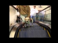 ▶ Welcome to Pawsitive Service Dog Solutions - YouTube Learn more here about amazing Autism Service Dogs