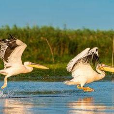 Experices in Romania: Danube Delta Complete Tour – Romanian Journeys Danube Delta, Utila, Sustainable Tourism, Romania, Journey, Tours, Travel, Viajes, The Journey