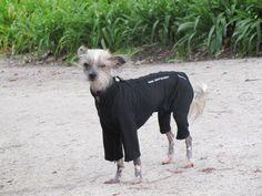 Pyjamas Dog Coats, Pyjamas, Goats, Animals, Coats For Dogs, Animaux, Animal, Animales, Goat