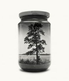 Tree from Jarred & Displaced, a series by Finnish photographer Christoffer Relander