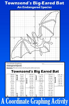 Townsend's Big-Eared Bat - An Endangered Species Coordinate Graphing Activity Secondary Activities, Secondary Math, Math Resources, Holiday Classrooms, Graphing Activities, Math Lesson Plans, Math Workshop, Teacher Favorite Things, Math Teacher