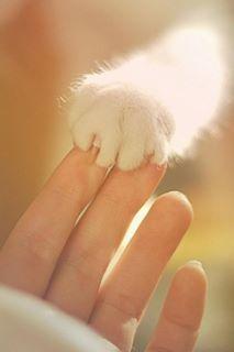 Sweet kitty cat paw. Looks like Figgy's paw.