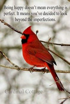 Thank you Jesus for all you have done for me. I see your Red Cardinals everywhere as your signs of Love from heaven! Pretty Birds, Love Birds, Beautiful Birds, Beautiful Day, Estrella Cardinal, Cardinal Birds, Cardinal Meaning, Bird Meaning, Cardinal Ornaments