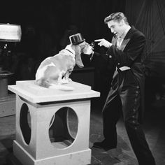 1 July 1956: Elvis Presley sings 'Hound Dog' to a hound dog on The Steve Allen Show Picture: NBCUPHOTOBANK / Rex Features