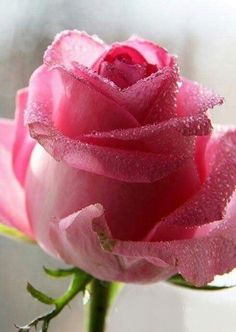 it must be nice secret tell me Most Beautiful Flowers, My Flower, Pretty Flowers, Gif Kunst, Pink Roses, Pink Flowers, Rose Pictures, Coming Up Roses, Planting Roses