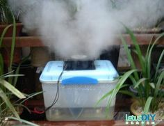 DIY plant humidifier -----LetusDIY.ORG|DIY Everything here