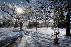 Ice Storm Toronto December 2013