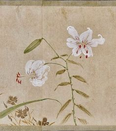 Sakai Hōitsu. Detail. Lilies. Handscroll; Japanese Painting. 1815; ink and color on paper.