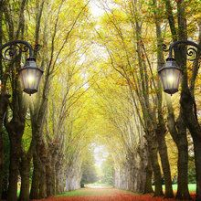 Fototapet - Alley with Trees