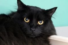 Update: Adopted :-) Selena has been adopted from the Seattle Humane Society