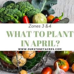 April Planting Guide - Zones 5 & 6 - Our Stoney Acres Growing Shallots, Growing Onions, Growing Lettuce, Growing Peas, Growing Green Beans, Tips For Growing Tomatoes, Growing Vegetables, Building A Raised Garden, Raised Garden Beds
