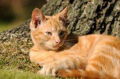Tyfus kotów
