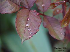 Makro po deszczu. To chyba moje ulubione zdjęcie z tych które zrobiłam w swojej krótkiej karierze fotografa ;)