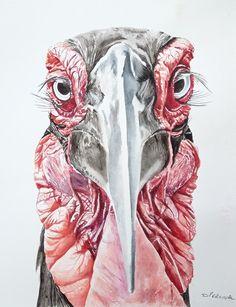 Southern ground hornbill by Dave Percival Bird Paintings, Bird Drawings, Painting & Drawing, Southern, Owl, Birds, Artist, Animals, Instagram