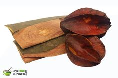 The bark of Arjuna is known to be a great blood toxifier and also improve coronary health.It is a effective herbal treatment as it strengthens the heart. Herbal Cure, Herbal Remedies, Home Remedies, Natural Remedies, Holistic Remedies, Ayurvedic Herbs, Ayurvedic Medicine, Ayurveda, Herbal Medicine