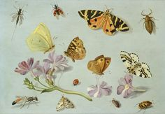 jan Van Kessel the elder