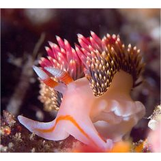 Nudibranch! ...from somewhere on the web